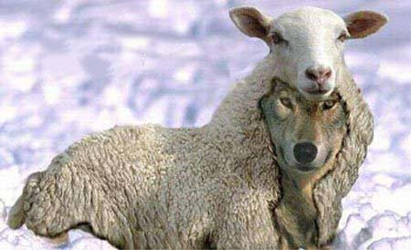 Sheep - Big one - wolf-in-sheeps-clothing