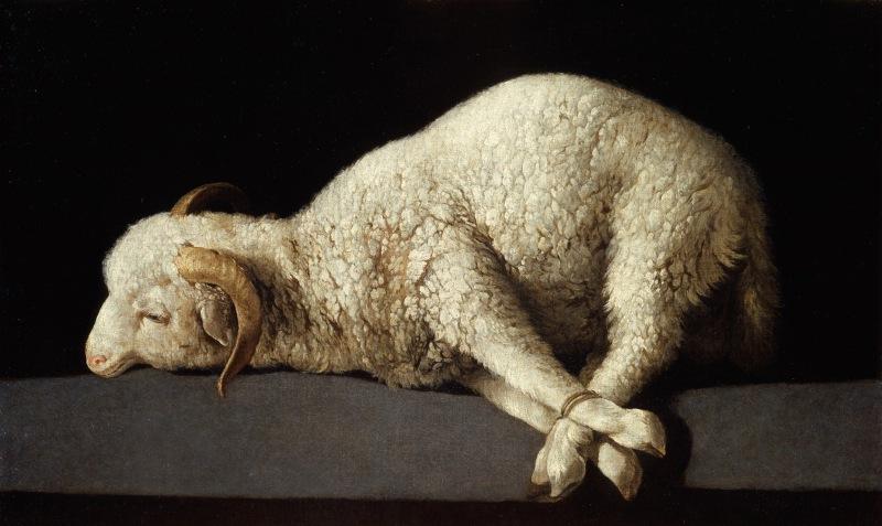 Sheep - the Lamb of God