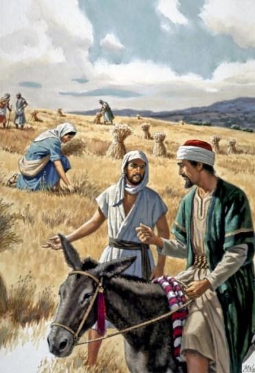 Kinsman - Ruth gleaning