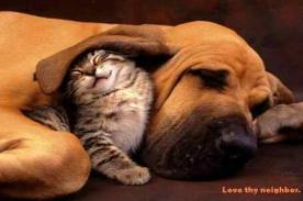 Dog and cat - love one another