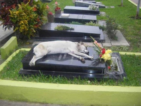 Dog and Grave 3
