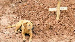 Dog and Grave