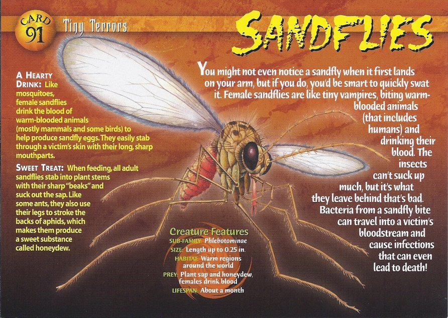 egyptian-sandflies_front